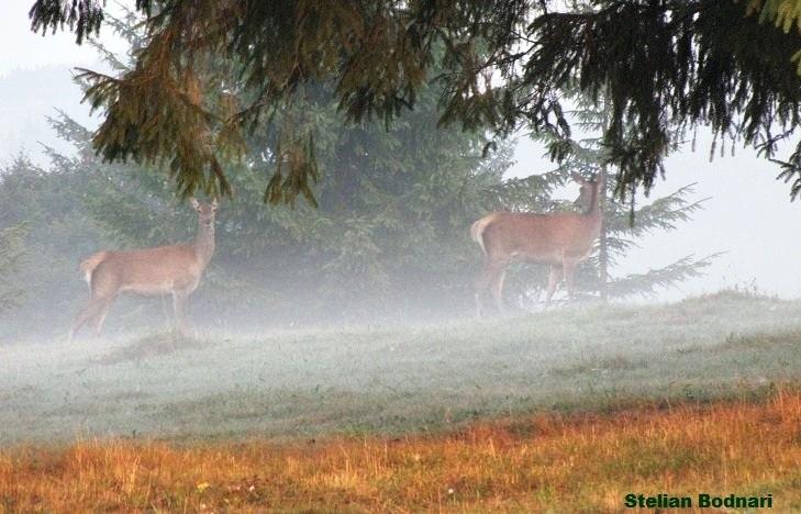 Ciute in ceata dimineti de toamna