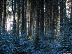 Loc de rotit /foto: Stelian Bodnari /WILD BUCOVINA © 2016 / Toate Drepturile Rezervate