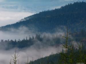 Habitatul cocoşului de munte /foto: Stelian Bodnari /WILD BUCOVINA © 2016 / Toate Drepturile Rezervate