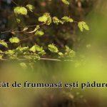 Cât de frumoasă ești pădure! - How beautiful are you, forest!