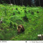 Răscrucea sălbăticiei din munţii Bucovinei