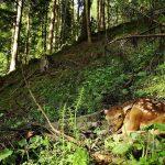 Inima sălbatică a Europei - Spectaculoase fotografii cu animale din Bucovina, expuse la Bruxelles