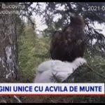 """Reportaj PRO TV """"Viața unei familii de acvile din România..."""" 01-08-2021"""